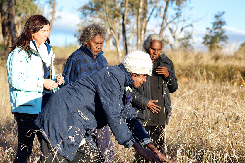 Peta-Marie Standly with (left to right) Cape York traditional owners Dorothy Pootchemunka and Dawn Koondumbin, and Joel Ngallametta (foreground), inspect native grass species at Bonegilla as part of a traditional fire knowledge exchange program